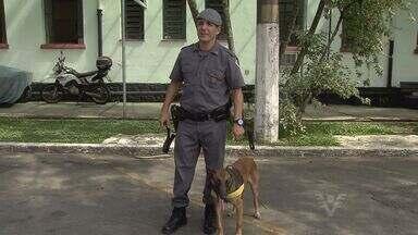 No domingo, em Santos, terá Tribuna Kids - Uma das atrações para a garotada são os cães da Polícia Militar.