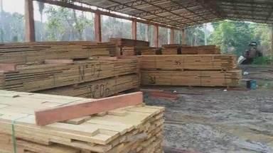 Fiscalização fecha serraria no interior do AM - Ibama ainda faz grandes apreensões de madeira ilegal