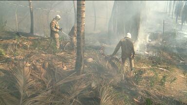 Incêndio é provocado em terreno na zona rural de Sousa - O corpo de Bombeiros explicou a causa do incêndio.