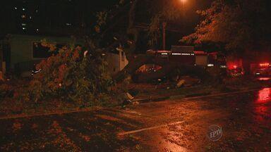 Casal morre atingido por árvore em Campinas - A árvore caiu no momento que chovia no município nesta quarta-feira, no Jardim Chapadão.
