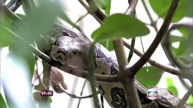 Ana Maria mostra cobra em árvore que fica próxima à Casa de Cristal - 'A gente preserva tudo o que tem na mata em volta da gente', conta a apresentadora