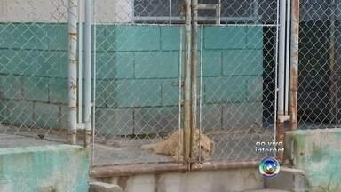 Campanha de vacinação contra a raiva é realizada neste sábado em Sorocaba - Você que mora em Sorocaba (SP) tem um gato ou cão de estimação. Amanhã tem campanha de vacinação contra a raiva. É uma vacina muito importante e vai ser aplicada de graça.