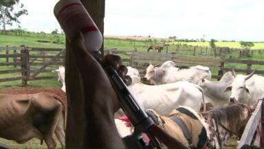 Paraná deve vacinar 9 milhões e 200 mil cabeças de gado contra a Febre Aftosa - A campanha de vacinação vai até o dia 30 de novembro, quem não cumprir paga multa