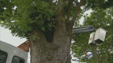 Prefeitura de Campinas remove árvores no bairro Chapadão após morte de casal - A Prefeitura de Campinas recebe 200 pedidos de remoção de árvores por mês.