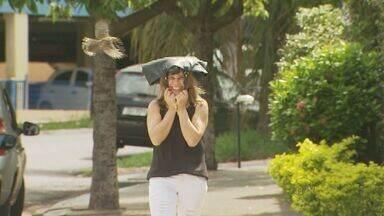 Pássaro ataca moradores e comerciantes em Ribeirão Preto, SP - Quem não fica atento acaba levando várias bicadas da ave.