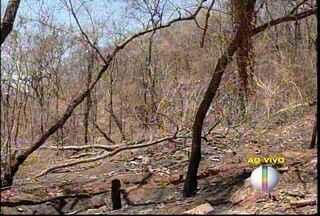 Incêndio no Parque da Lapa Grande é o maior registrado na reserva ambiental - Mais de 2 mil hectares já foram queimados; polícia suspeita de que o início do incêndio foi criminoso.