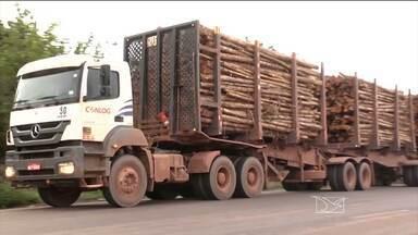 Corte nas plantações de eucalipto está mudando a paisagem ao longo das BRs 010 e 222 - O transporte das toras de madeira preocupa autoridades e a população de Açailândia.
