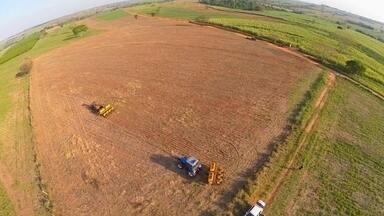 É hora de plantar soja - No noroeste do Estado, esse é o momento ideal para o plantio da soja. Choveu pouco e a terra está pronta para receber as sementes. A Companhia Nacional de Abastecimento (Conab) prevê um crescimento de 6% na produção de soja no país. Serão 101 milhões de toneladas.