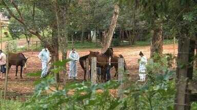 Confirmados novos casos de mormo em cavalos em Cruz Alta, RS - Animais estão na mesma propriedade em que um cavalo foi sacrificado em setembro.
