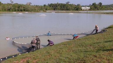 Especialista comenta sobre sistema intensivo de produção de peixes - Técnica tem a capacidade de triplicar a quantidade de peixes por hectare.