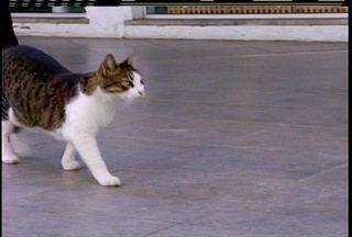 Gatos aparecem mortos nas Rua dos Biquínis, em Cabo Frio, e lojistas falam em assassinatos - Um dos animais foi morto a pauladas.