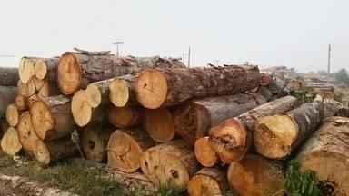 Operação combate desmatamento no interior do Amazonas - Objetivo é combate crime ambiental