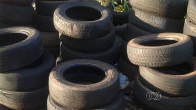 Telespectadores flagram criadouros do mosquito da dengue na capital - Foram registradas piscinas sujas abandonadas e vários pneus acumulados em um lote vago.