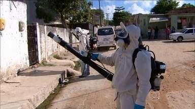 Paulista (PE) faz mutirão para combater mosquito da dengue - No ano passado, a cidade de Pernambuco teve quase três mil casos de dengue notificados. Ministério da Saúde confirmou a associação do Zika vírus com a síndrome de Guillain-Barré, uma doença neurológica rara que ataca o sistema nervoso.