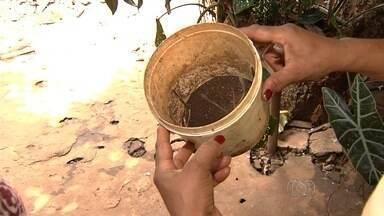 Governo decreta emergência sanitária por causa de casos de dengue, em Goiás - Determinação permite dispensa de licitações para conseguir materiais e contratações de serviços para combater o mosquito transmissor da doença.