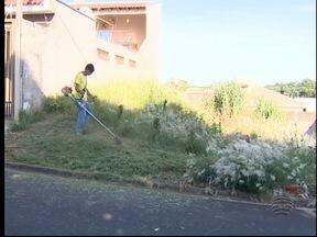 Procura por serviços de capina em terrenos aumenta - Moradores estão preocupados com o acúmulo e mato e lixo.
