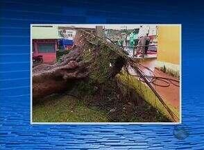 Chuvas são registradas em municípios de Pernambuco - Na Mata Sul, moradores foram surpreendidos com a intensidade da chuva.