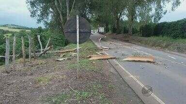 Chuva derruba eucalipto e volta a causar estragos em diversas cidades do Sul de Minas - Chuva derruba eucalipto e volta a causar estragos em diversas cidades do Sul de Minas
