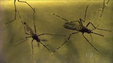 Casos suspeitos de dengue em 2015 atingiram maior número desde 1990 - Foram registrados um 1,649 milhão de casos prováveis em todo o país. O Sudeste teve a maior concentração da doença e ainda tivemos mais de 20 mil casos de febre chikungunya.