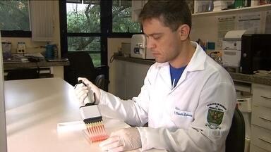 Pesquisadores encontram mais uma ligação entre zika vírus e microcefalia - Mais de 400 pesquisadores de todo o país estão estudando o zika vírus. No interior de São Paulo, o resultado de um teste reforçou a tese de que a doença está relacionada à microcefalia.