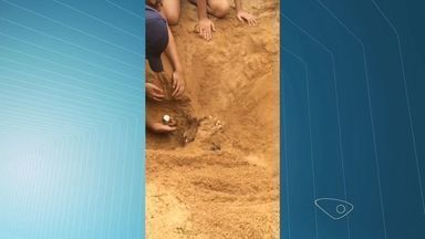 Vídeo mostra filhotes de tartaruga saindo de ninho em praia do ES - Engenheiro disse que ajudou 100 filhotes a ganharem o mar.Projeto Tamar dever ser acionado pelo (27) 3225 3787, diz oceanógrafa.