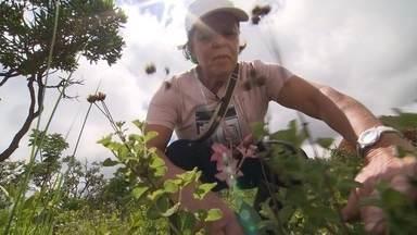 Reprise: Cientistas visitam fazenda de Araxá para pesquisar plantas medicinais - Terra de Minas mostra a tradição do uso de plantas medicinais