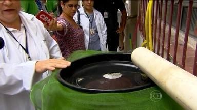 São Paulo recebe mutirão contra o mosquito da dengue - Um grande mutirão contra o mosquito que transmite a dengue, zika e chikungunya acontece em São Paulo.