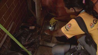 Guarujá faz mutirão contra criadouros da Dengue - A cidade de Guarujá, no litoral de São Paulo, fez um mutirão para procurar criadouros do mosquito da Dengue na região do Paecará.