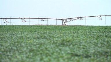 Soja é o bom investimento para os agricultores do DF - A soja tem sido um bom investimento para os agricultores do Distrito Federal.