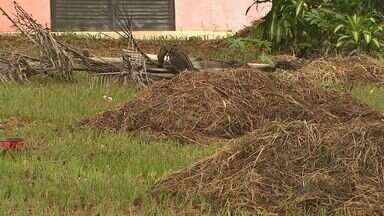 'Até Quando?': Prefeitura limpa praça em Ribeirão, mas deixa restos de poda - Restos de grama ficaram espalhados pela calçada na Avenida Diederichsen.