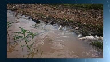 Morrem mais de 19 toneladas de peixe em Goiás - Há suspeita de que o Lago Serra da Mesa tenha sido contaminado.
