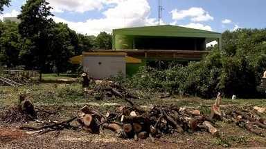 Moradores estão revoltados com o corte de árvores na 216 Sul - Moradores da 216 Sul ficaram revoltados com o corte das árvores de uma área da quadra. Os responsáveis pelo corte mostraram uma autorização da Novacap, e disseram que no lugar vai ser feita uma obra.