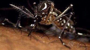 Cientistas explicam por que os mosquitos transmitem tantas doenças - 'O mosquito é o animal que mais mata pessoas no planeta', diz o diretor do Centro de Controle de Doenças dos Estados Unidos.