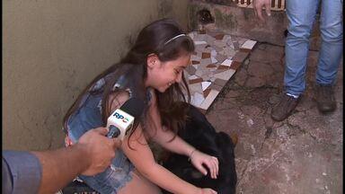 Pérola Crepaldi apresenta Fiona - Cantora do The Voice Kids tem uma rottweiler de estimação