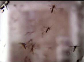 Equipes da Secretaria Municipal de Saúde de Gurupi realizam multirão contra Aedes aegypti - Equipes da Secretaria Municipal de Saúde de Gurupi realizam multirão contra Aedes aegypti