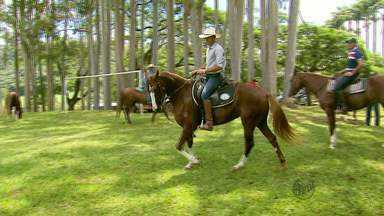 Exposição em Guaranésia (MG) reúne cavalos Manga Larga de várias partes do país - Exposição em Guaranésia (MG) reúne cavalos Manga Larga de várias partes do país