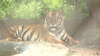 Daiane visita safári paranaense - O espaço que abriga os animais fica em Tibagi, interior do Paraná.