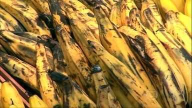 Banana da terra é a mais rica em nutrientes - A nutricionista Rachel Francischi explica que, além de potássio e vitamina C, a banana da terra tem vitamina A. A banana não deve ser guardada na geladeira. Para conservar, a fruta pode ser cozida e congelada.