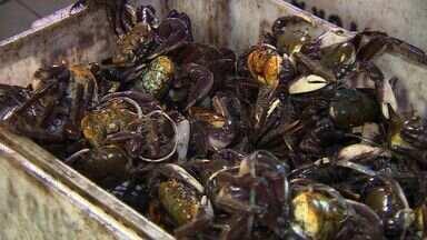 Defeso do caranguejo vai até 28 de fevereiro em Sergipe - Defeso do caranguejo vai até 28 de fevereiro em Sergipe