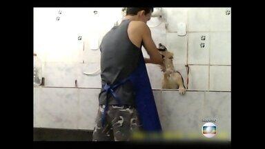 Justiça condena acusados de agredir animais em pet shop no Engenho de Dentro - O Tribunal de Justiça condenou mãe e filho, donos da loja.