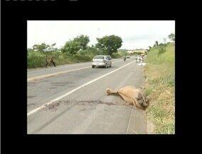 Motociclista morre ao se chocar contra cavalo na BR - 381 - Acidente ocorreu próximo ao Distrito Industrial de Valadares.