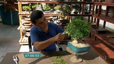 Bonsaista dá dicas para deixar as árvores em miniatura sempre bonitas - O bonsaista Marcio Azevedo ensina a tratar as plantas usando a técnica de cultivo que mantém em miniatura qualquer espécie. Ele revela segredos como a maneira correta de podar e o modo de adubar, que ajudam a deixar as árvores bonitas e saudáveis.