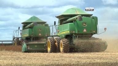 Rondônia se destaca como maior produtor de soja da Região Norte - Soja movimenta a economia da região.