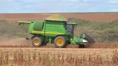 Safra é volumosa, mas é abaixo do esperado - Colheita da soja se aproxima do fim. Estiagem em momentos importantes do ciclo comprometeu desempenho das lavouras.
