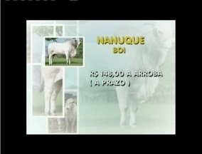 Confira a cotação do boi gordo - Em Nanuque, a arroba do boi custa R$ 148 e a da vaca é vendida por R$ 135.