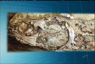 Fóssil de coração de peixe milenar é encontrado na Chapada do Araripe, no Ceará - Peixe viveu na região há 110 milhões de anos.