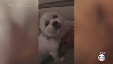 Cachorros de Felipe Neto fazem sucesso em vídeos na internet - Mel Maia também fala sobre sua mascote