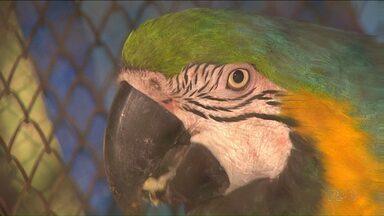 Ladrões roubam aves de zoológico em Cascavel - Três aves, duas araras e um papagaio, foram levadas. As araras foram recuperadas dentro de uma mochila no terminal de Cascavel.