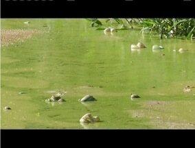 Lagoa de Ipaba é transformada em esgosto e gera problemas - Espaço era cartão postal da cidade e passa a gerar transtornos.