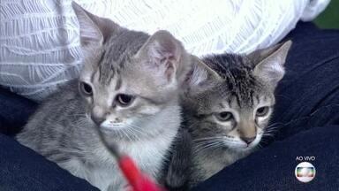 Voluntários resgatam gatos na rua e promovem adoção - A veterinária Rita Ericson fala sobre os cuidados para quem pretende resgatar um gato e como fazer para colocá-lo para adoção responsável
